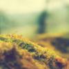 AQQ Prime 2.4.5.20 - ostatni post przez Eleks
